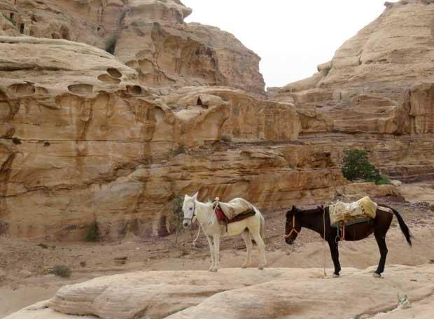 passeio de cavalo em petra