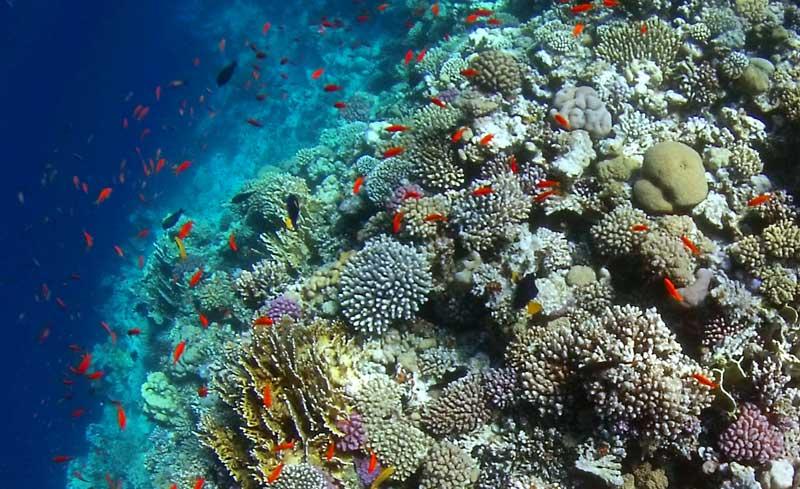 peixes e corais mar vermelho