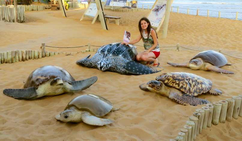 tartarugas encontradas no Brasil