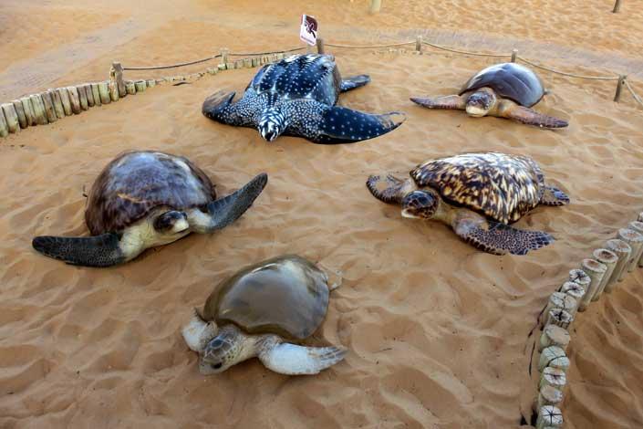 tartarugas marinhas brasil