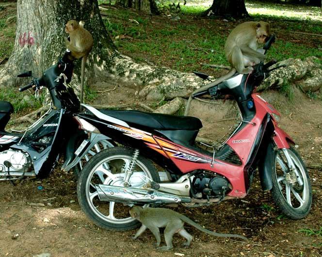 atrações angkor