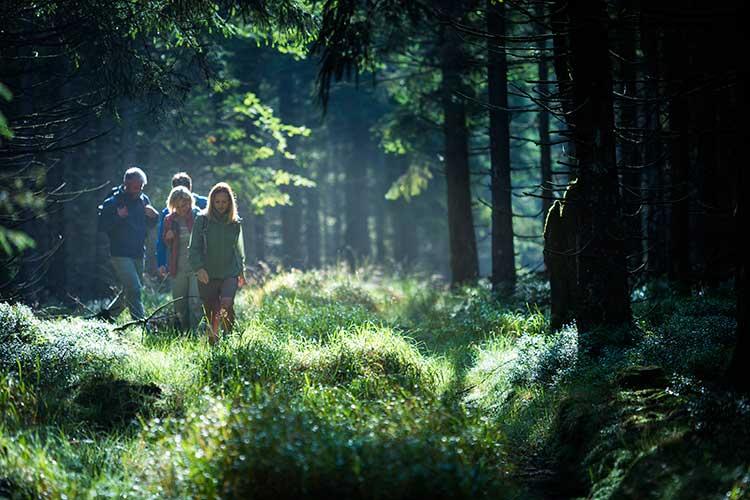 Floresta da Turíngia trekking