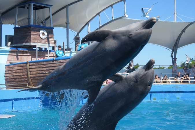 golfinho Miami Seaquarium